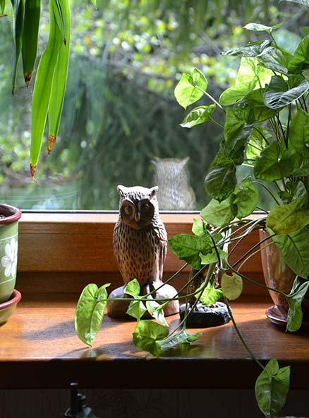 деревянный подоконник с совой